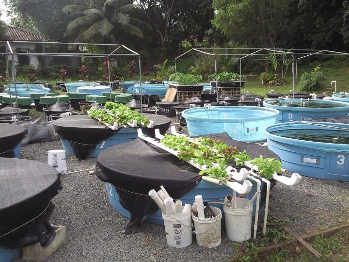 aquaponics farm