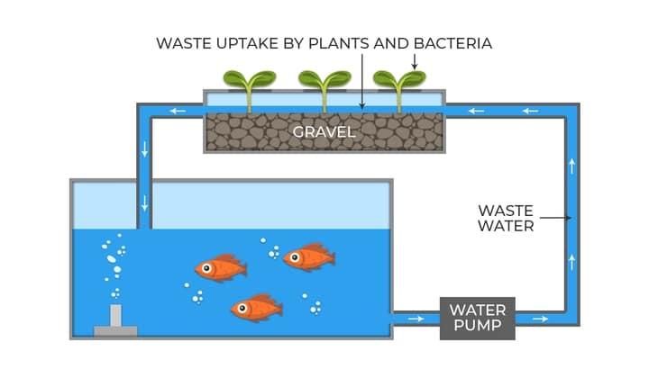 aquaponics media filled tank