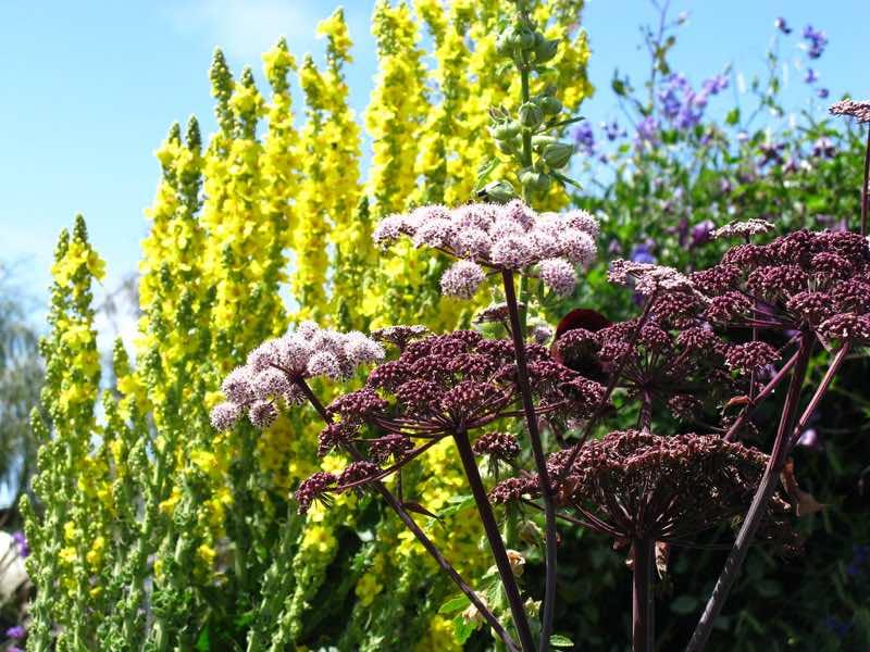 beautiful perennial flowers