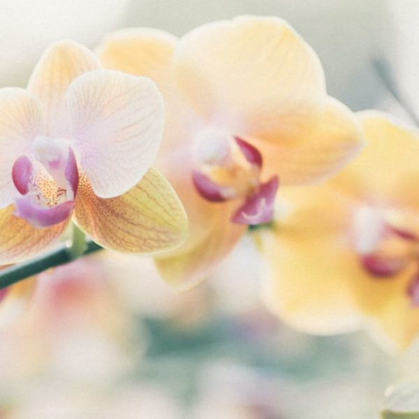 dreamy orchid flowers