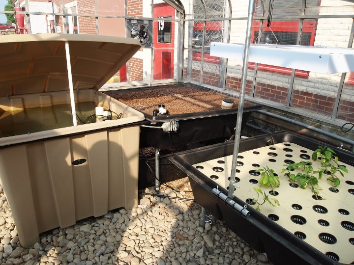 ebb and flow aquaponic media filled beds
