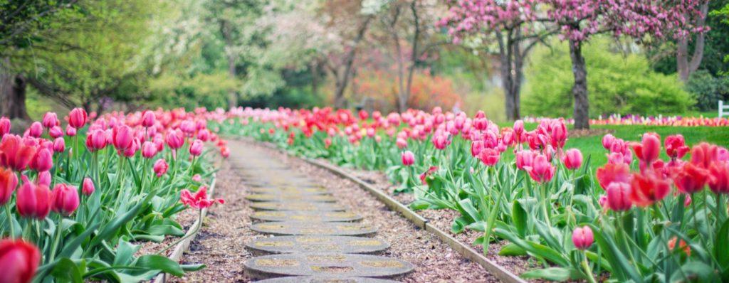 garden edging path