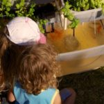 growing basil in aquaponics