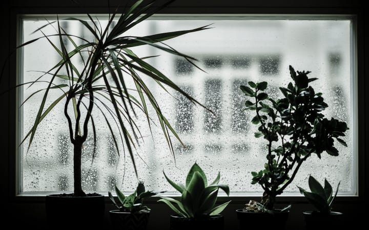 indoor house plants are not picky
