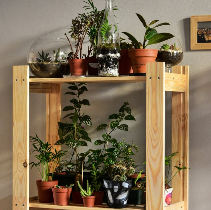indoor house plants on stand