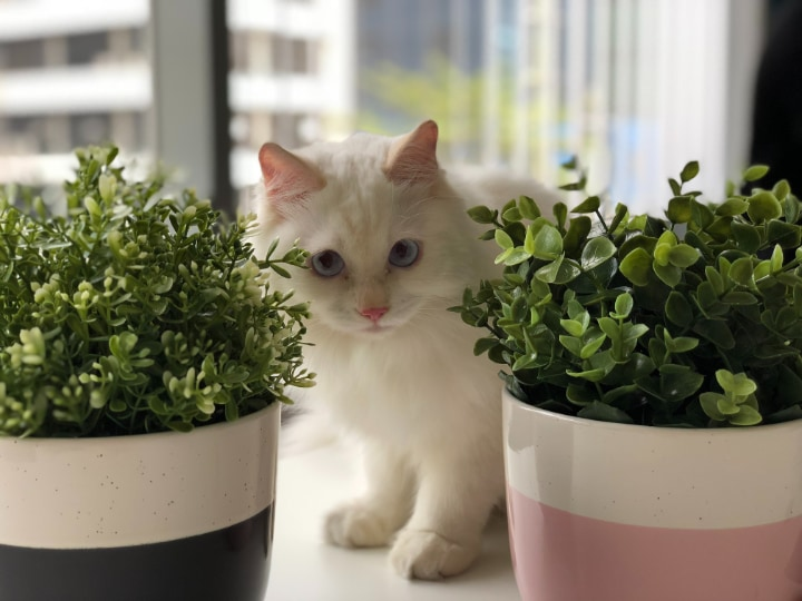 indoor plants and cats