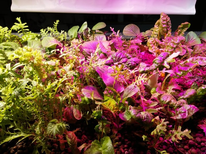 light source for an aquaponic system
