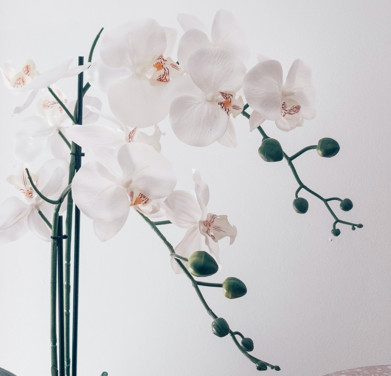 orchids types