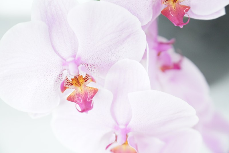 pruning orchids