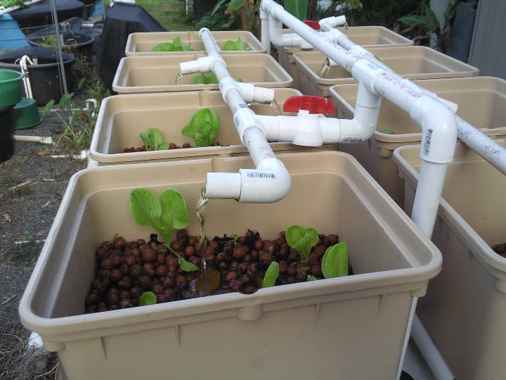 self watering and sustainable aquaponics system