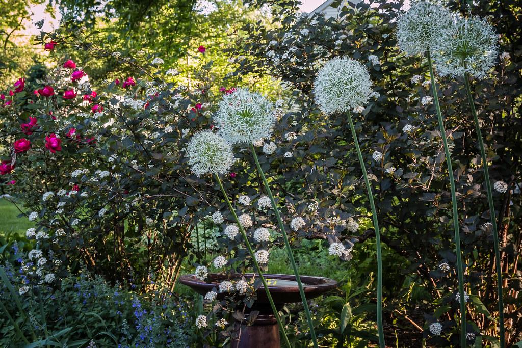 tall perennials flower border