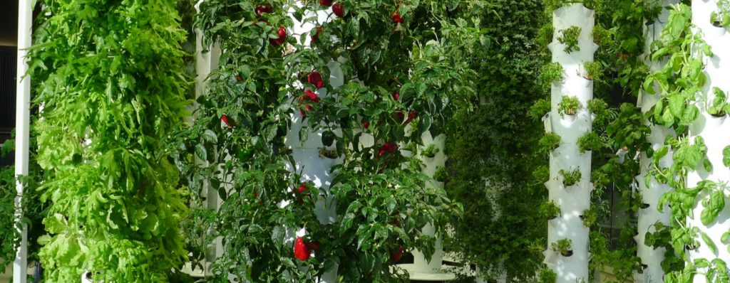 vertical farming using an aeroponic system