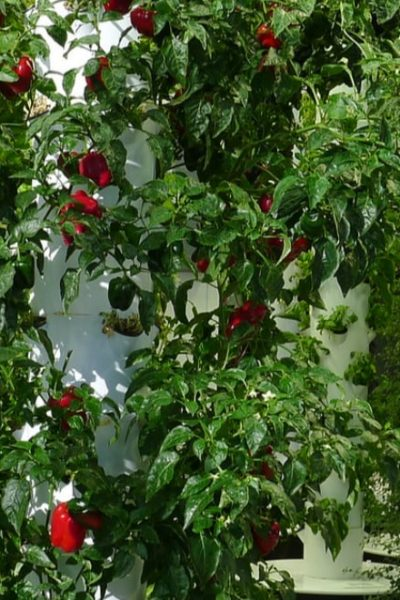 vertical farming using an aeroponic system
