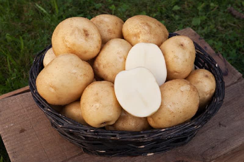 Katahdin potatoes