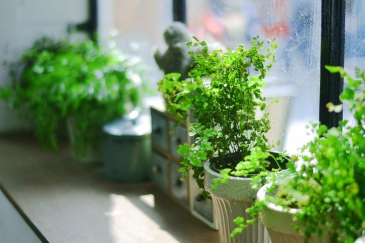 apartment garden in pots