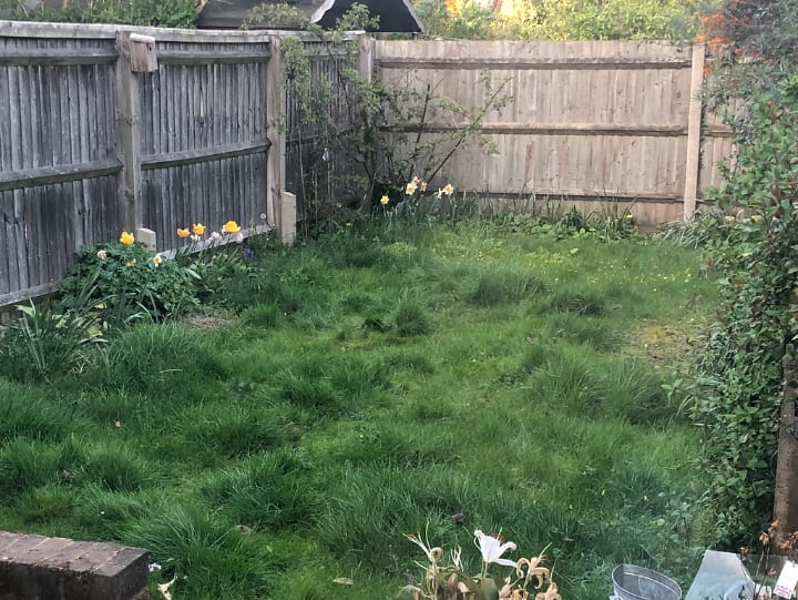 backyard that needs trimminng