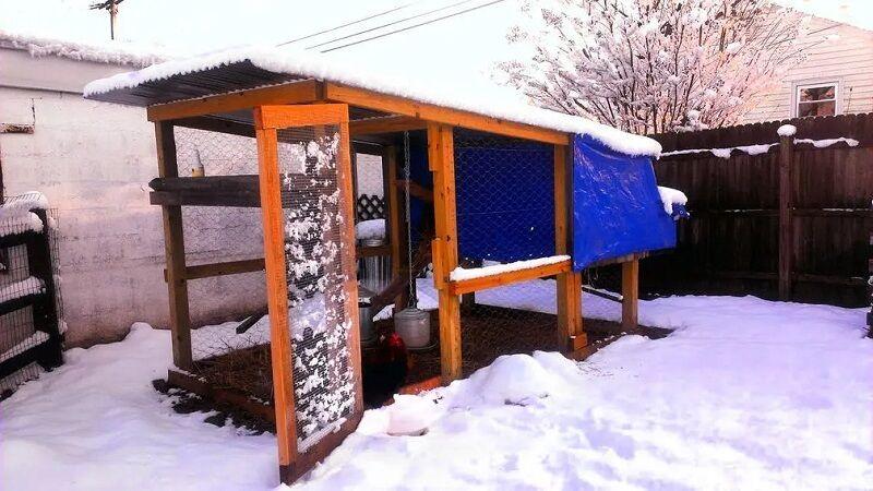 basic DIY chicken coop