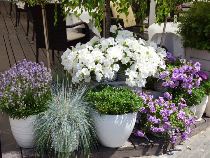 beautiful potted garden