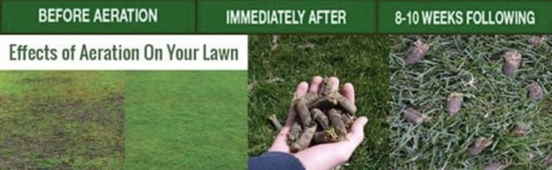 before vs after lawn aeration
