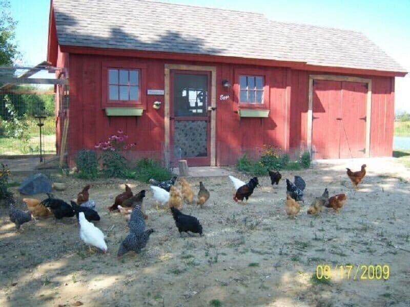 big red chicken house