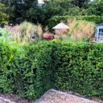 budget garden landscaping with hedges