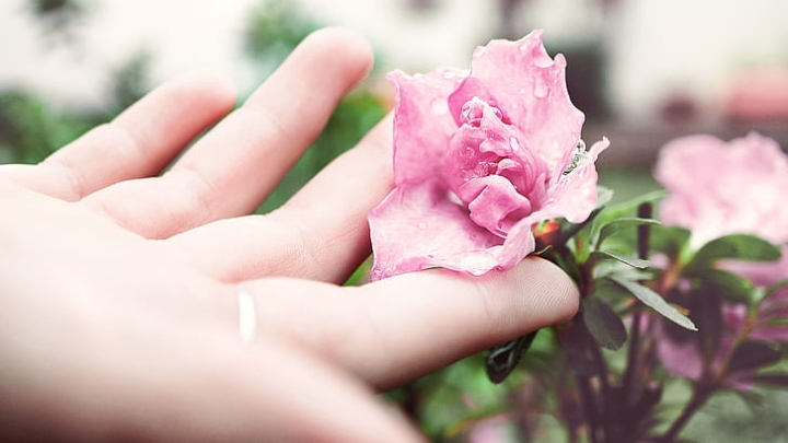 caring for peony