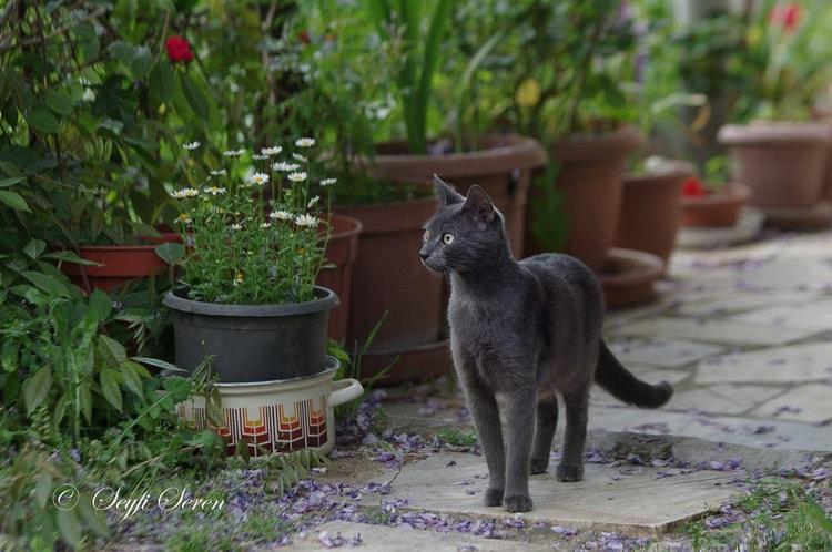 cat walking in the garden