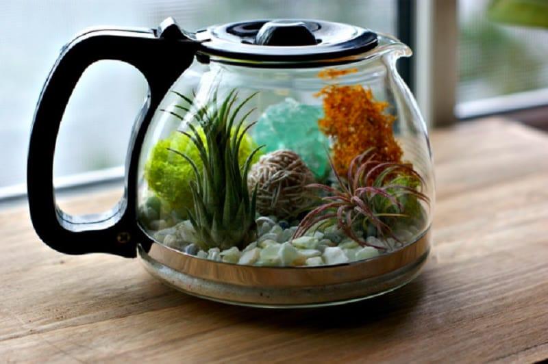 coffee pot terrarium idea