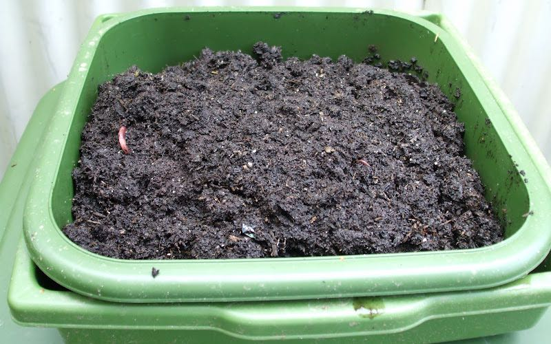 compost tray for growing mushrooms