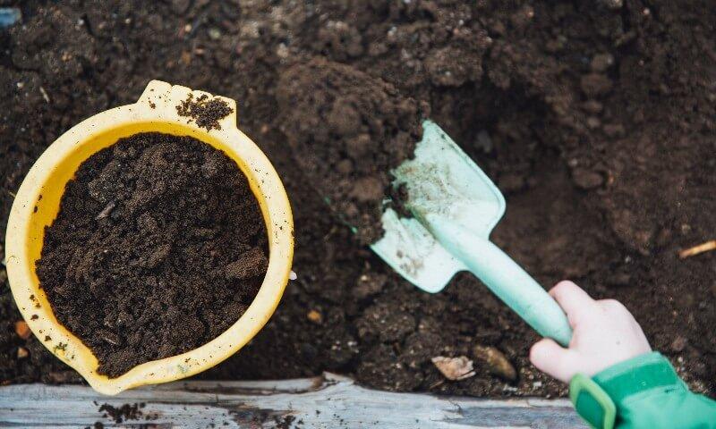 cucumber soil