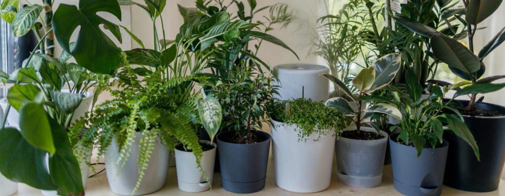 different plants on varied pot designs