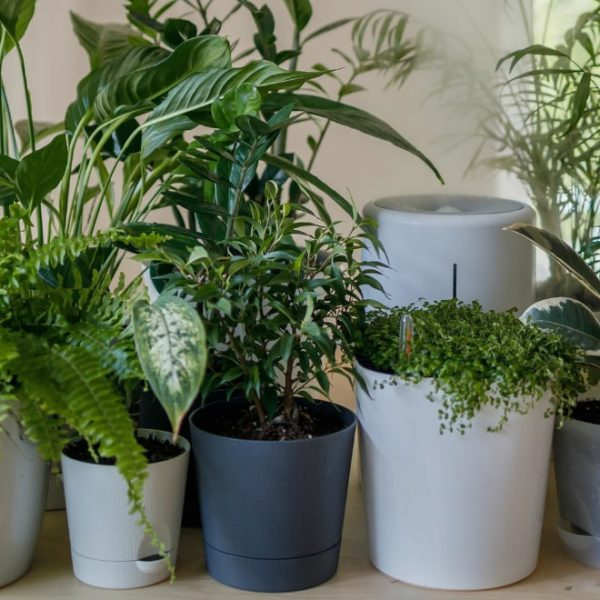 different plants on varied pot designs
