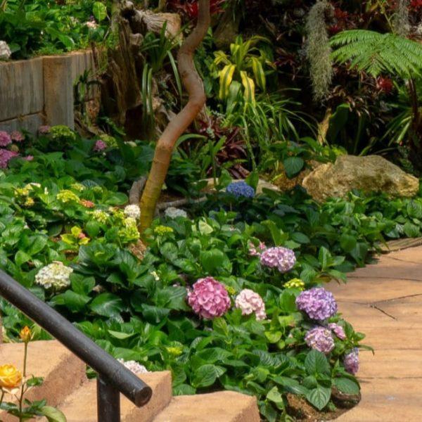 dreamy secret flower garden