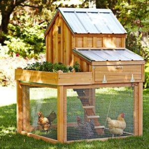 free chicken coop plans ideas