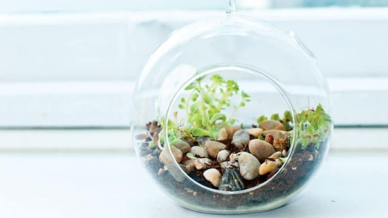 glass bubble terrarium ideas 1