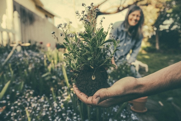 health benefits gardening