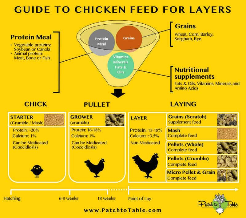how to feed chickens