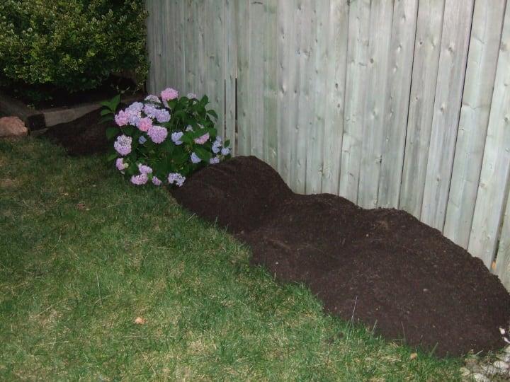 hydrangea soil
