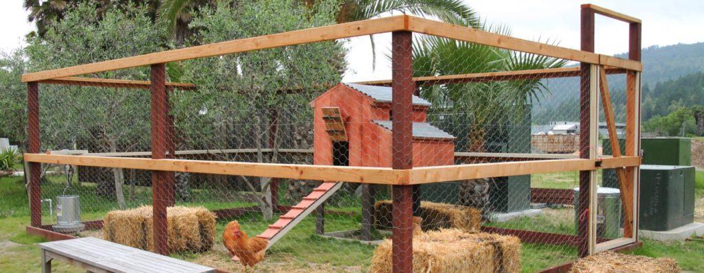 large chicken coop design