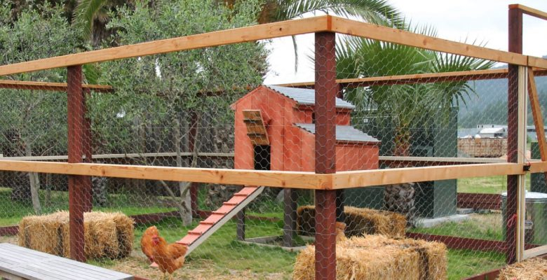 large chicken coop design