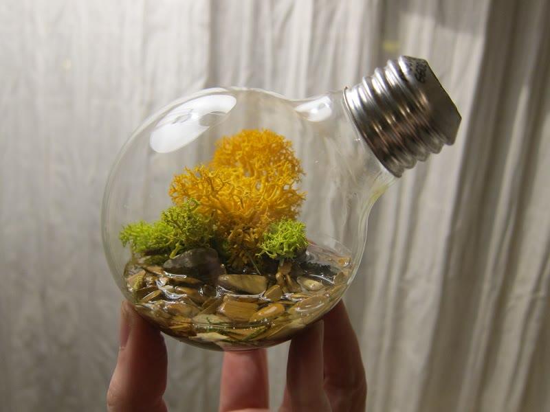 lightbulb terrarium idea