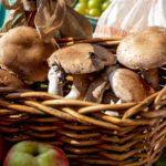 mushroom growing kits and how to grow mushrooms
