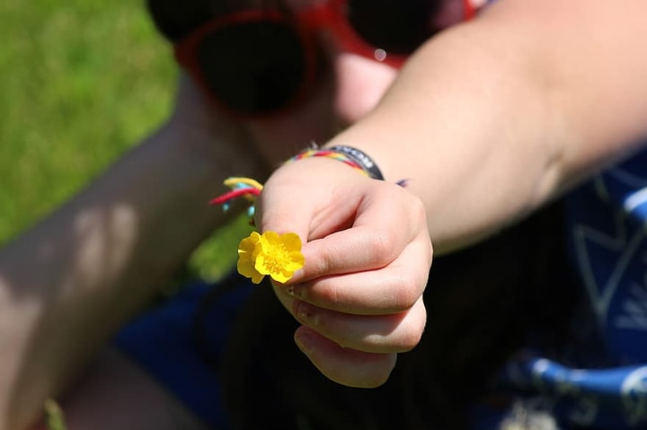 person holding a ranunnculus flower