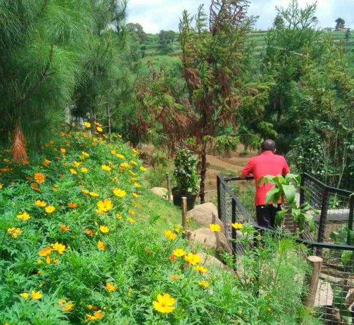 planting ranusculus outdoors