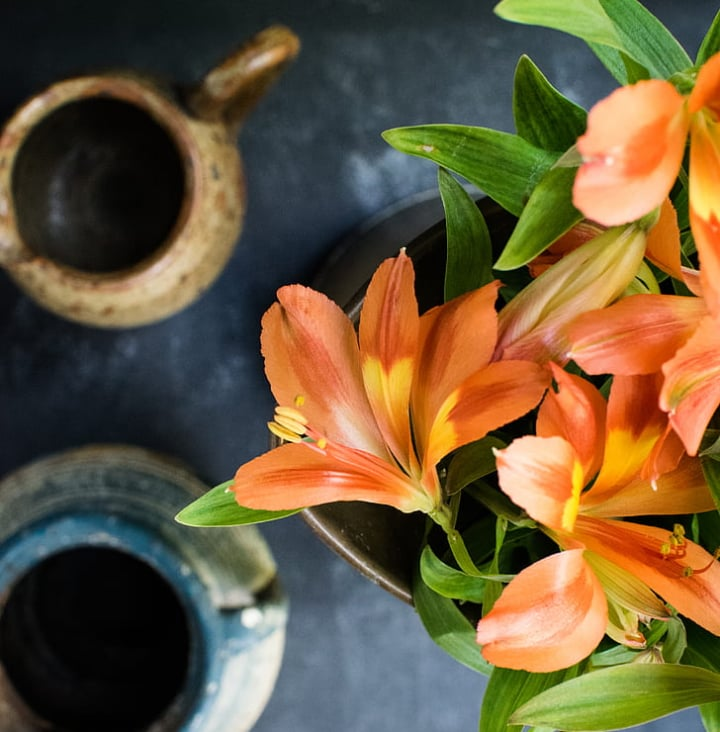 potted lily flower