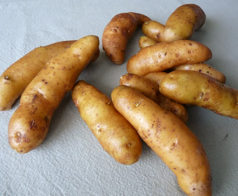 princess laratte potatoes