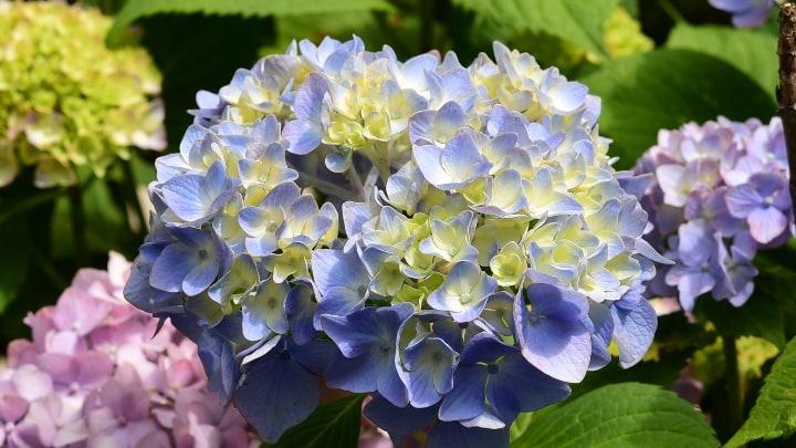 select hydrangea flowers