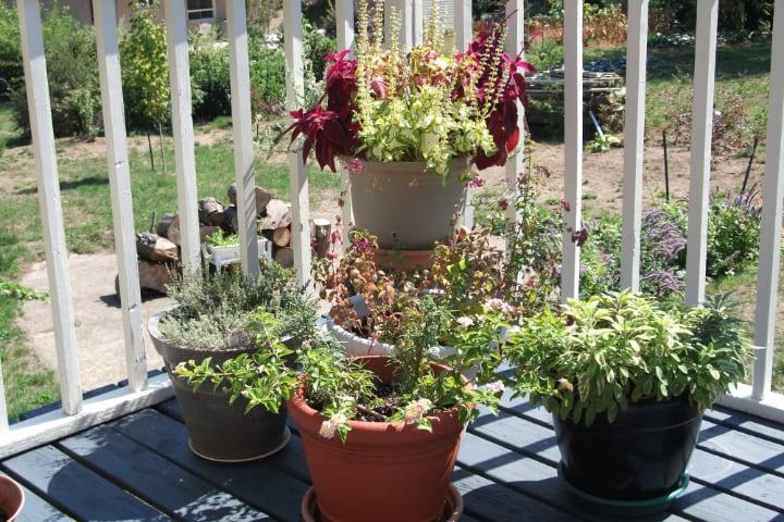 sunny plant pot deck