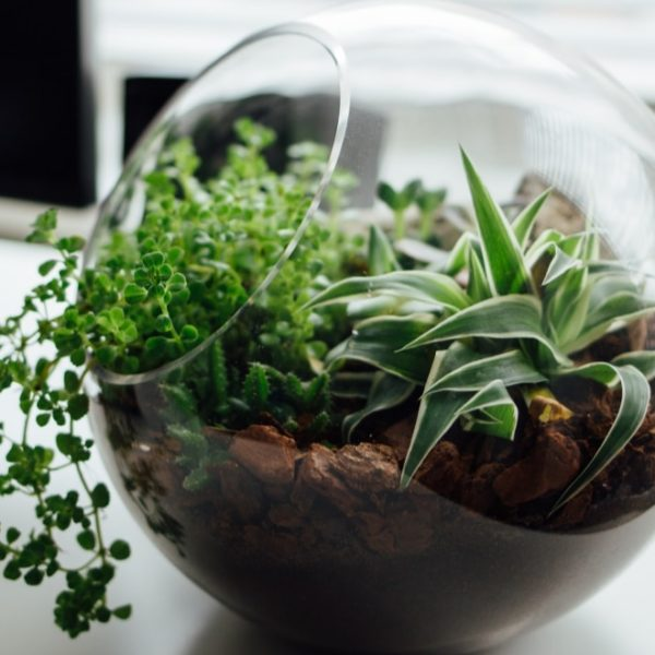 terrarium on top of the table