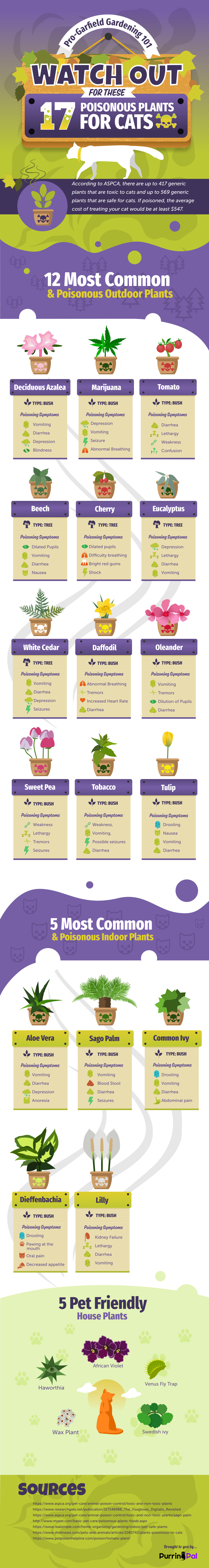Toxic Plants for Cats Infographics
